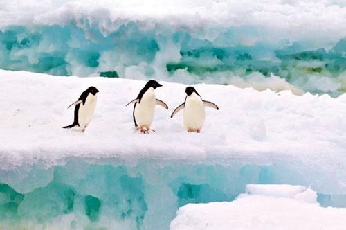 南极,这个地球最南端遥远而神奇的第七大陆